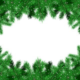 Green fir tree branches Christmas background Stock Photos