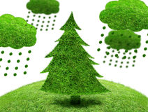 Green fir tree on a patch of grass Stock Images