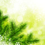 Green Fir Tree and Snowflakes. Over Vitality Green Background Stock Image