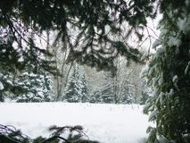 GREEN fir-tree IN WHITE SNOW, IN A large PLAN. Christmas royalty free stock photo