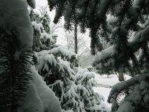 GREEN fir-tree IN WHITE SNOW, IN A large PLAN. Christmas stock photo