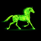 Green fire horse. Illustration of green fire horse on black background Stock Photography