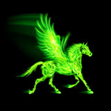 Green fire Pegasus. Illustration of green fire Pegasus on black background Stock Images
