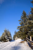 Green firtrees and  road covered with snow Royalty Free Stock Images