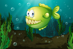 A green fish with big fangs under the sea. Illustraton of a green fish with big fangs under the sea Royalty Free Stock Images
