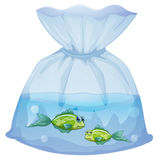 Green fishes inside the plastic pouch. Illustration of the green fishes inside the plastic pouch on a white background Royalty Free Stock Images