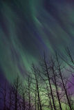 Green flame. Northern lights display in south central Alaska April 2014 Royalty Free Stock Images