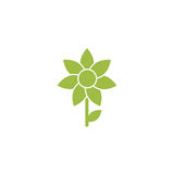 Green flat icon of sunflower with sprig and leaf. Isolated on white. Vector illustration. Eco style. Nature flower symbol Stock Photos
