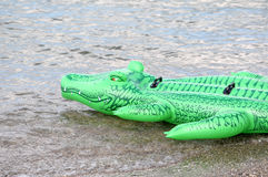 Green floater crocodile. In the water Stock Image