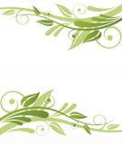 Green Flora Design. On white background royalty free illustration
