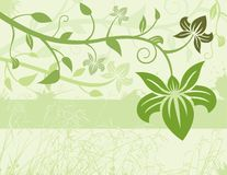 Green Floral Background. With flowers and branches Royalty Free Stock Photography