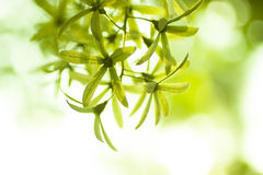 Green floral background Stock Images