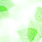 Green Floral Border of Leaves Royalty Free Stock Photography