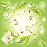 Green floral butterfly and gold bug Royalty Free Stock Photos