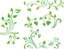 Green floral element. Vector collection of four green branches with leaves Royalty Free Stock Photos