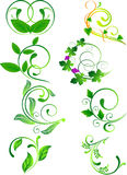 Green floral element Royalty Free Stock Photography