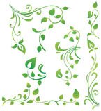 Green floral elements. Vector collection of five green branches with leaves Stock Images