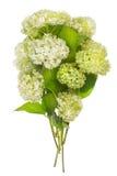Green floral fireworks Stock Images