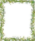 Green Floral Frame or Border Stock Photos
