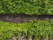 Green floral hedge and woven fence Stock Photos