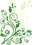 Green floral ornament. Green floral element for design Royalty Free Stock Images