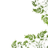 Green floral pattern on white background Stock Photography