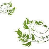 Green floral pattern on white background Royalty Free Stock Photography