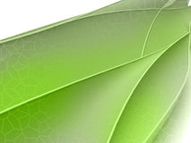 Green floral shape wide screen concept Royalty Free Stock Images