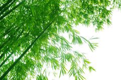 Green flourish bamboo foliage Royalty Free Stock Photography