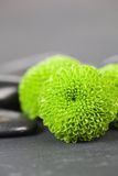 Green Flower. Close-up with black stones Stock Photo