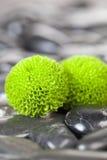 Green Flower Stock Photo