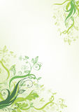 Green flower. Natural abstract background Royalty Free Stock Photos