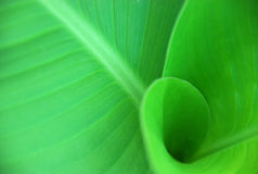 Green leaf. Detail Royalty Free Stock Images