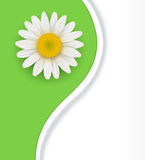 Green flower Background Stock Photography