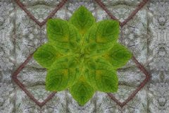 Green flower on dry Leaf pattern Royalty Free Stock Images