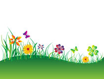 Green Flower Field. Beautiful background of flower field Royalty Free Stock Photo
