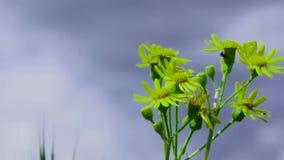 Green Flower stock video footage
