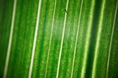 Green flower foliage, macro photoghaphy. Leaf structure detail Stock Photography