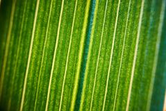 Green flower foliage, macro photoghaphy. Leaf structure detail Stock Photo