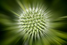 Green flower. With Zoom blur stock photo