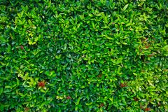 Green flower and green leaf in nature for background. Nature concept with empty area for text. feeling relaxed in the nature. Royalty Free Stock Images