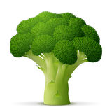 Green flower head of broccoli close up Stock Images