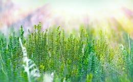 Green flower illuminated with sun rays Stock Photos