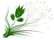 Green flower Royalty Free Stock Photo
