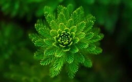 Green flower like plant Stock Photography