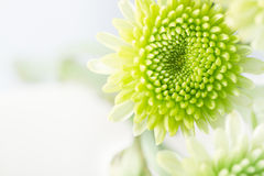 Green flower Royalty Free Stock Photography