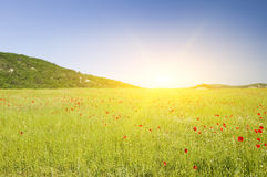 Green flower meadow on in mountains. Stock Photo