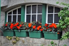 Green flower planters Royalty Free Stock Image
