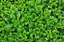 Green flower plants in the garden. Stock Images
