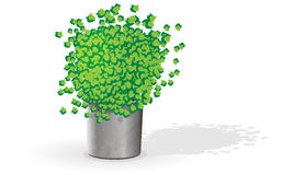 Green flower in a pot. Green ficus with juicy, spherical krone in a modern silvery pot Royalty Free Stock Photo
